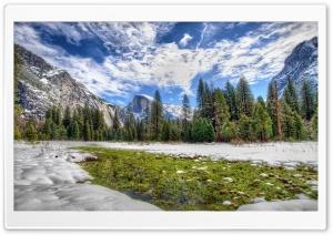 Yosemite Spring Grass