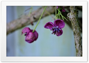 Hanging Purple Flower