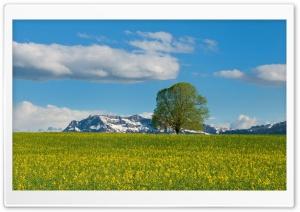 Mountain Meadow Spring