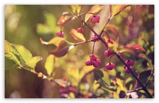 Download Pink Fruits UltraHD Wallpaper