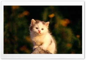 Little Cat Watching Poor