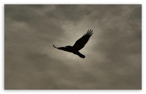 Download Crow Flying Silhouette UltraHD Wallpaper