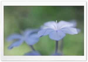 Light Blue Flower Macro