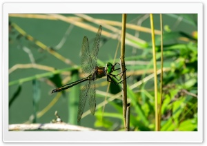 Falcon Dragonfly