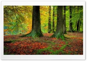 Trees Trunks, Autumn