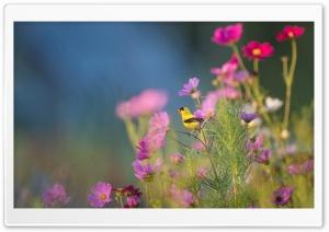 Small Yellow Bird on a Flower