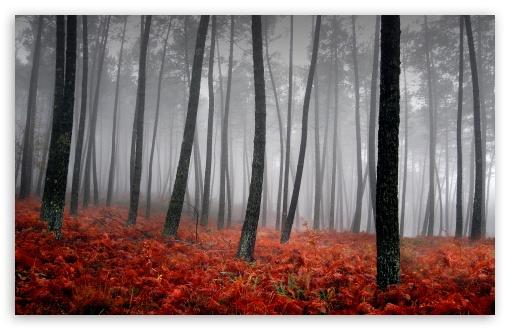 Download Bloody Forest UltraHD Wallpaper