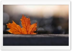 Maple Leaf, Bokeh