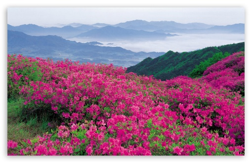 Download Pink Wildflowers UltraHD Wallpaper
