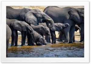 Elephants Drinking Water,...