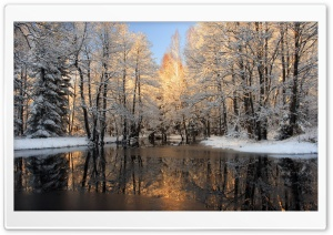 Forest Lake, Winter