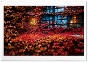 Red Ivy, Lights, House,...