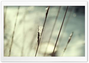 Snow On Grass Macro