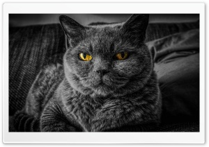 Cats Eyes Relax