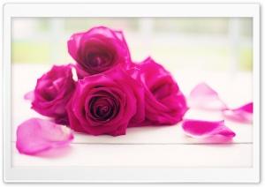 Roses Good Morning
