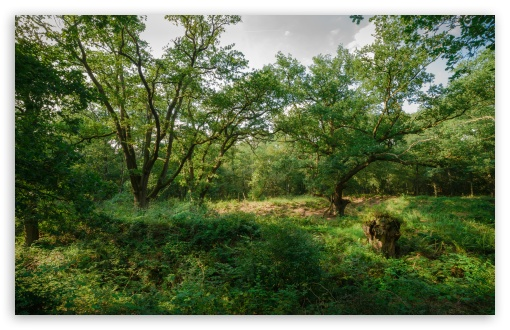 Download Green Forest UltraHD Wallpaper