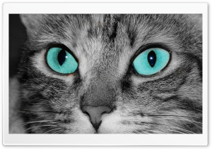 Close Up Of A Grey Tabby Cat...