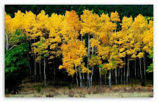 Download Autumn Trees UltraHD Wallpaper
