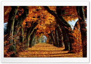 Beautiful Path