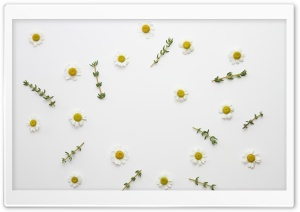 Daisy Flowers and Thyme Herb