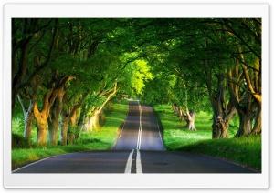 Road, Summer