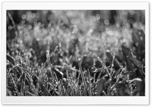 Dewdrops Grass III