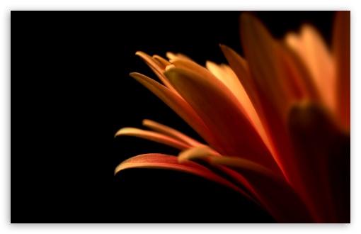 Download Contrast Flower UltraHD Wallpaper