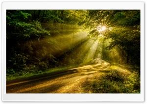Sun Rays through the Forest...