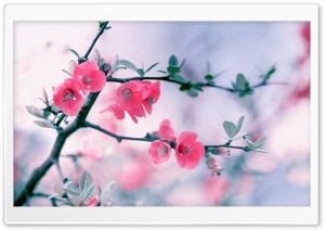 Pink Blossom Flowers, Spring