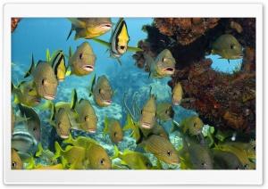 Florida Keys National Marine...