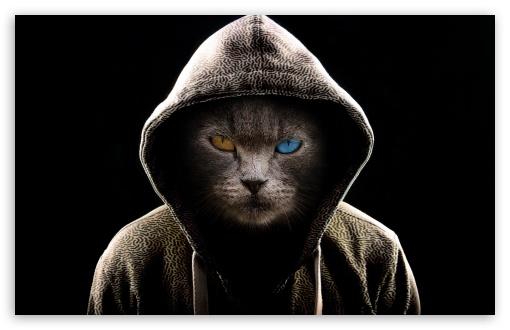 Download Undercover Cat UltraHD Wallpaper