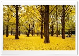 Yellow Autumn in Japan
