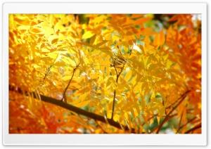 Yellow   Orange Autumn Foliage