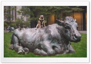 Pug Dog Posing