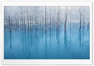 Swamp Winter