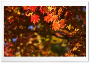 October in Japan