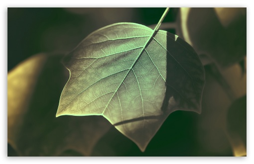 Download Tree Leaves Macro UltraHD Wallpaper