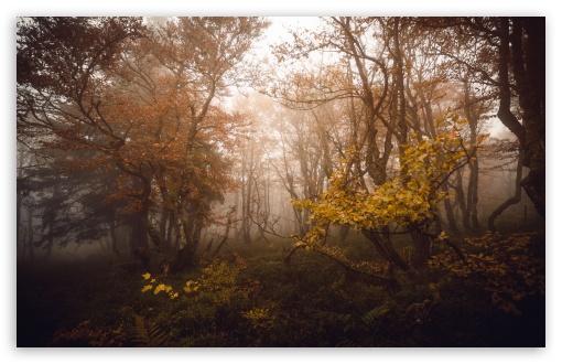 Download Autumn Deciduous Forest UltraHD Wallpaper