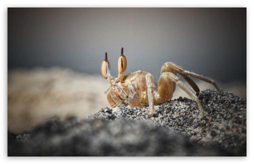 Download Crab UltraHD Wallpaper