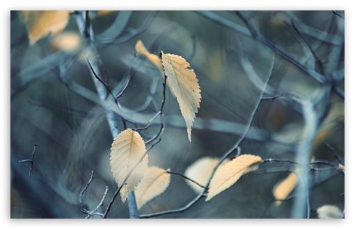 Download Armenia, Autumn Leaf UltraHD Wallpaper