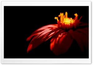 Flower   Dark