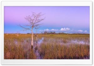 Pink Sunset, Wetlands,...