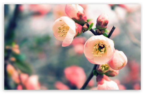 Download Welcome Spring UltraHD Wallpaper
