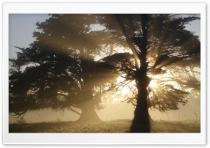 Trees With Sunlight