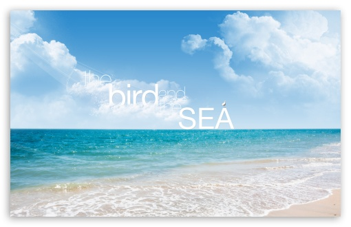 Download The Bird and The Sea UltraHD Wallpaper