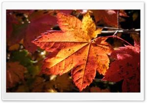 Morning Leaf