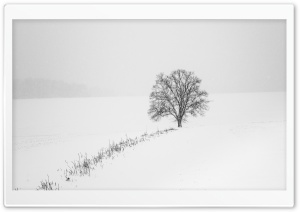 Tree, Snow, Winter, Erzgebirge