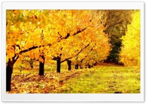 Golden Orchard