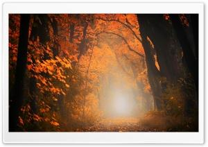 Picturesque Scenes, Tree...