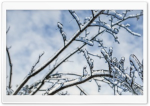 Branches Engulfed In Ice 2